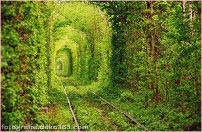 Beispiel der Natur gewann die menschliche Architektur (4)