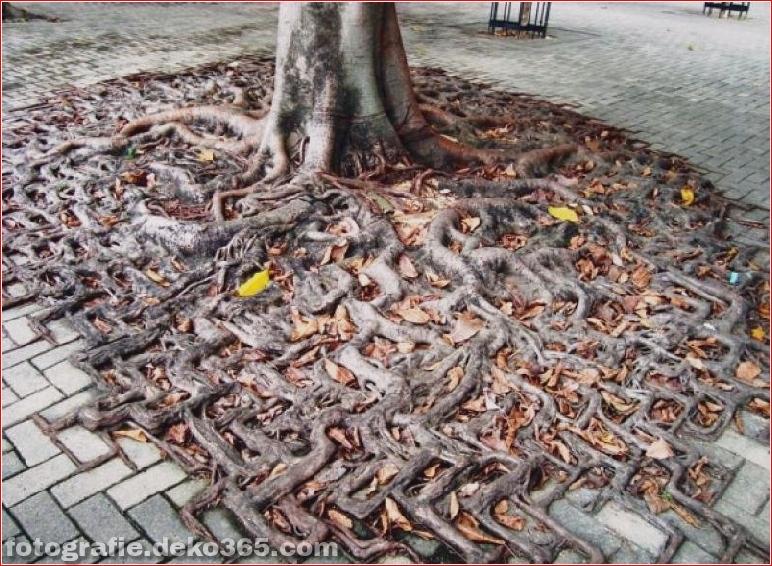 Wie die Natur den Krieg mit der Zivilisation gewinnen wird_5c900da4be24c.jpg