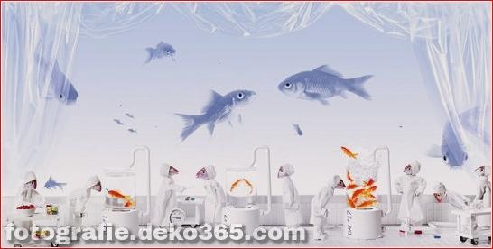 Echte Fischköpfe, die in Fotografien verwendet werden (5)