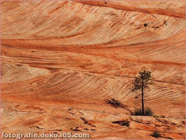 Zion National Park_5c90433777905.jpg